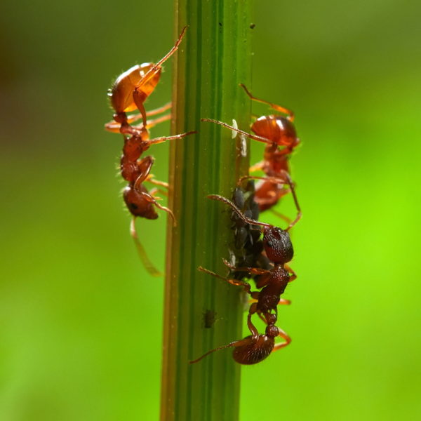 Summer Ant Prevention