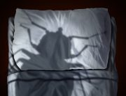 Link to blogpost: Keep The Bed Bugs Out Of Your Home