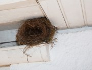 Link to blogpost: Bird Control: Bird Nest Removal Tips