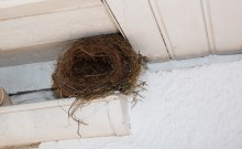 bird nest removal