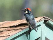 Link to blogpost: DIY Tips for Keeping Birds Away