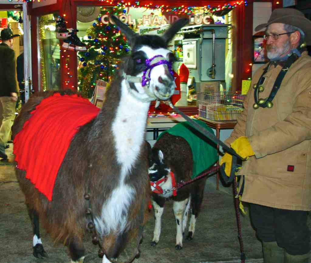 holiday llamas