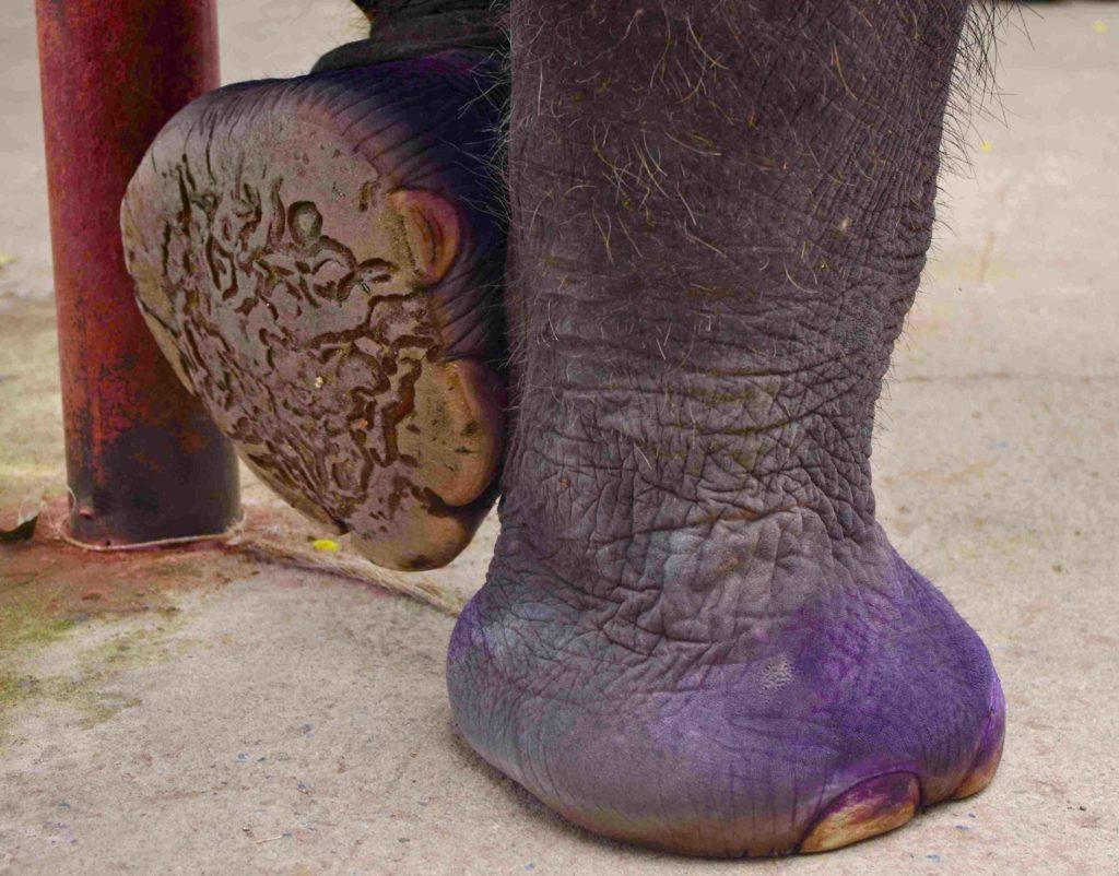An Ayutthaya tour with a former street walker