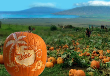 Pumpkin field Hawaii