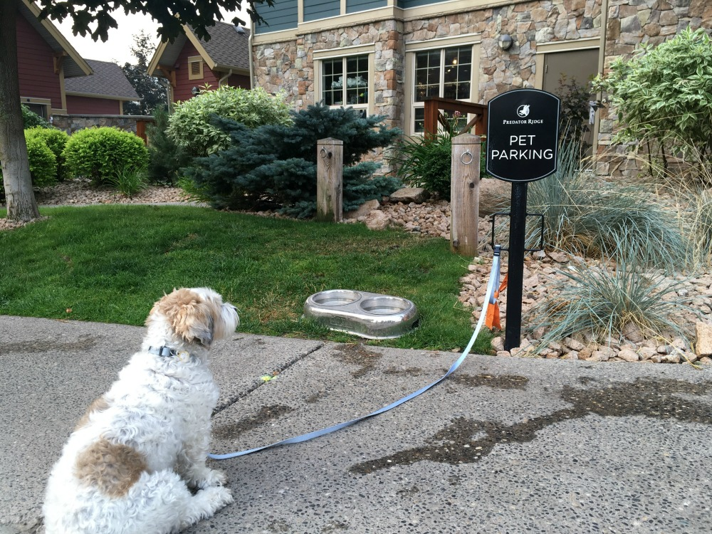 dog parking station