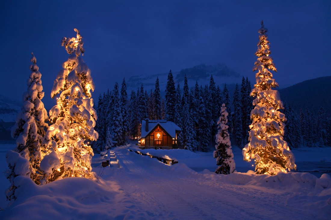 Christmas trees rockies