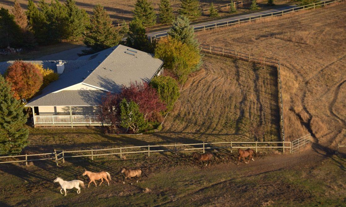 horses running in a field aerial veiw