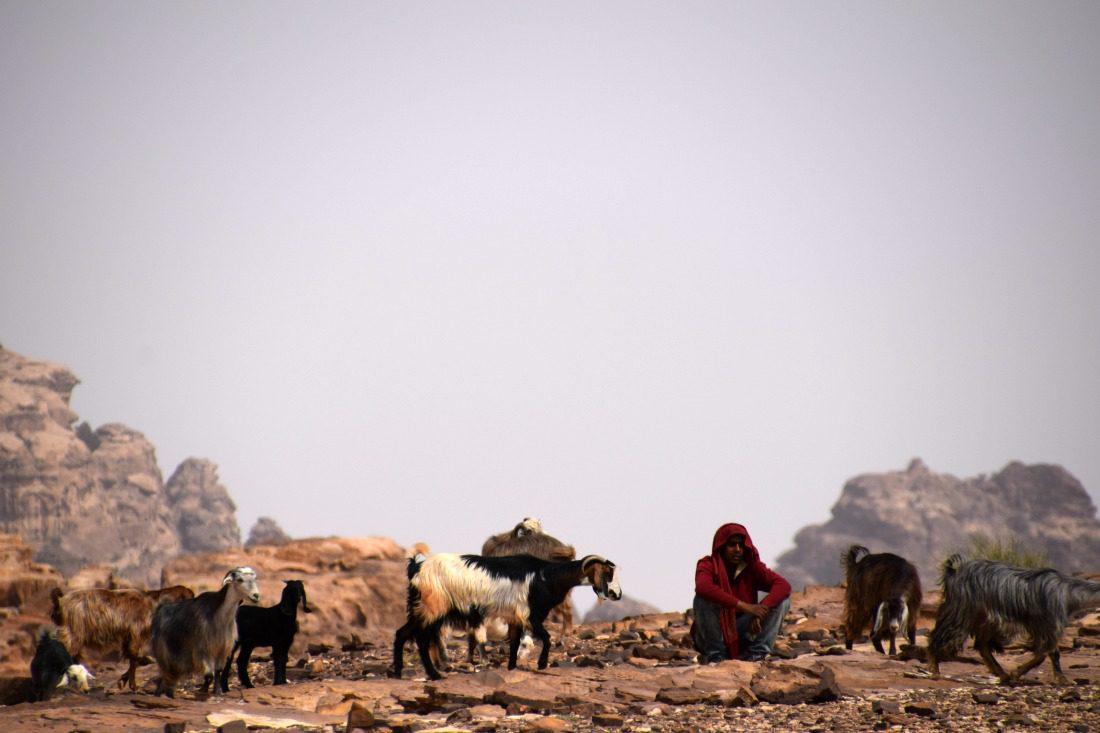 bedouin shepherd petra jordan