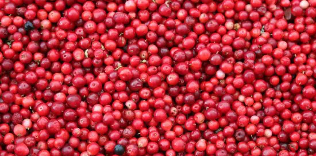 Canadian Cranberries