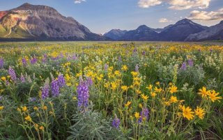 What to do in Waterton