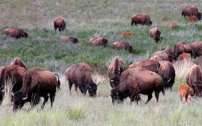 Bison Range, Montana
