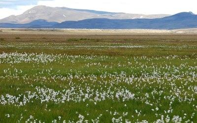 IJsland, Hveragerdi, Veenpluis