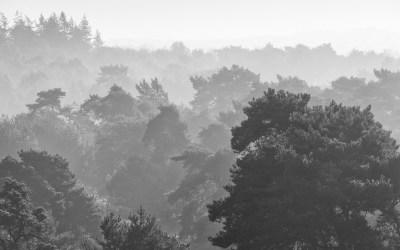 Uitzicht vanaf uitkijktoren, Landgoed De Utrecht, 12-9-2014