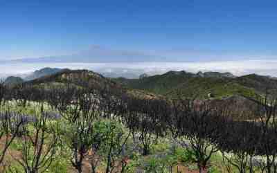 La Gomera, hoogste punt van Garajonay. In 2012 is hier een grote bosbrand geweest. In de verte ligt Tenerife