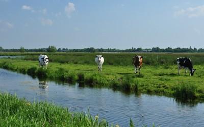 Tussen Boven-Haastrecht en Polsbroek, 5-6-2013