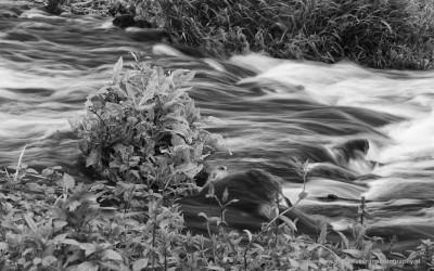 Stromend water, Molenplas, Stevensweert, 26-7-2015