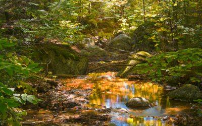 Poeltje in de buurt van de Cascade Brook Trail, Franconia State Park, NH, USA, 6-10-2015