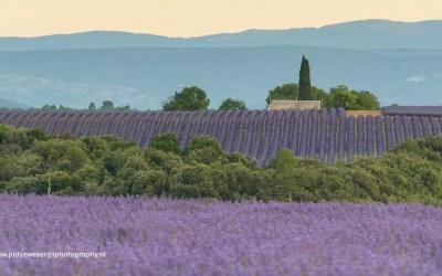 Valensole, Provence, Frankrijk, 4-7-2016