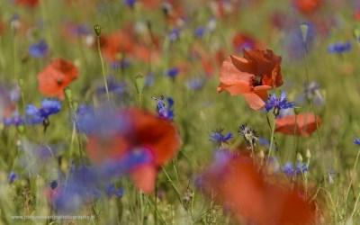 Langs de D34, Provence, Frankrijk, 9-7-2016
