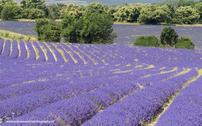 Revest du Bion, Provence, Frankrijk, 10-7-2016