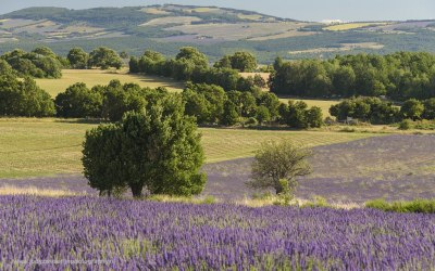 Revest du Bion, Provence, Frankrijk, 13-7-2016