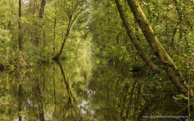 De jungle van de Weerribben, Kalenberg, Nederland, 19-8-2016