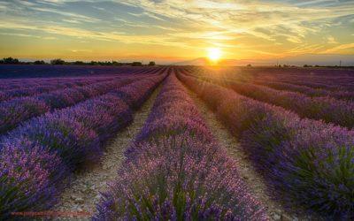Zonsopkomst bij Valensole, Provence, Frankrijk, 4-7-2016
