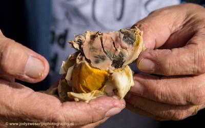 Balut: gekookt ei met bijna volgroeid kuiken, Luzon, Filipijnen, 17-11-2017