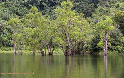 Mangroven bij Balinsasayao Twin Lakes, Negros, 24-11-2017
