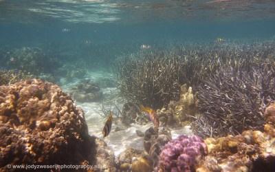 Snorkelen in de Coral Gardens, Coron, Filipijnen, 29-11-2017