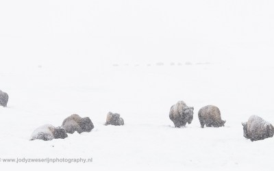 Yellowstone januari 2019