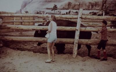 Helaas nog geen ontmoeting met een bizon in het wild