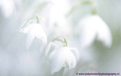 Sneeuwklokjes, Amelisweerd, Bunnik, 22022021