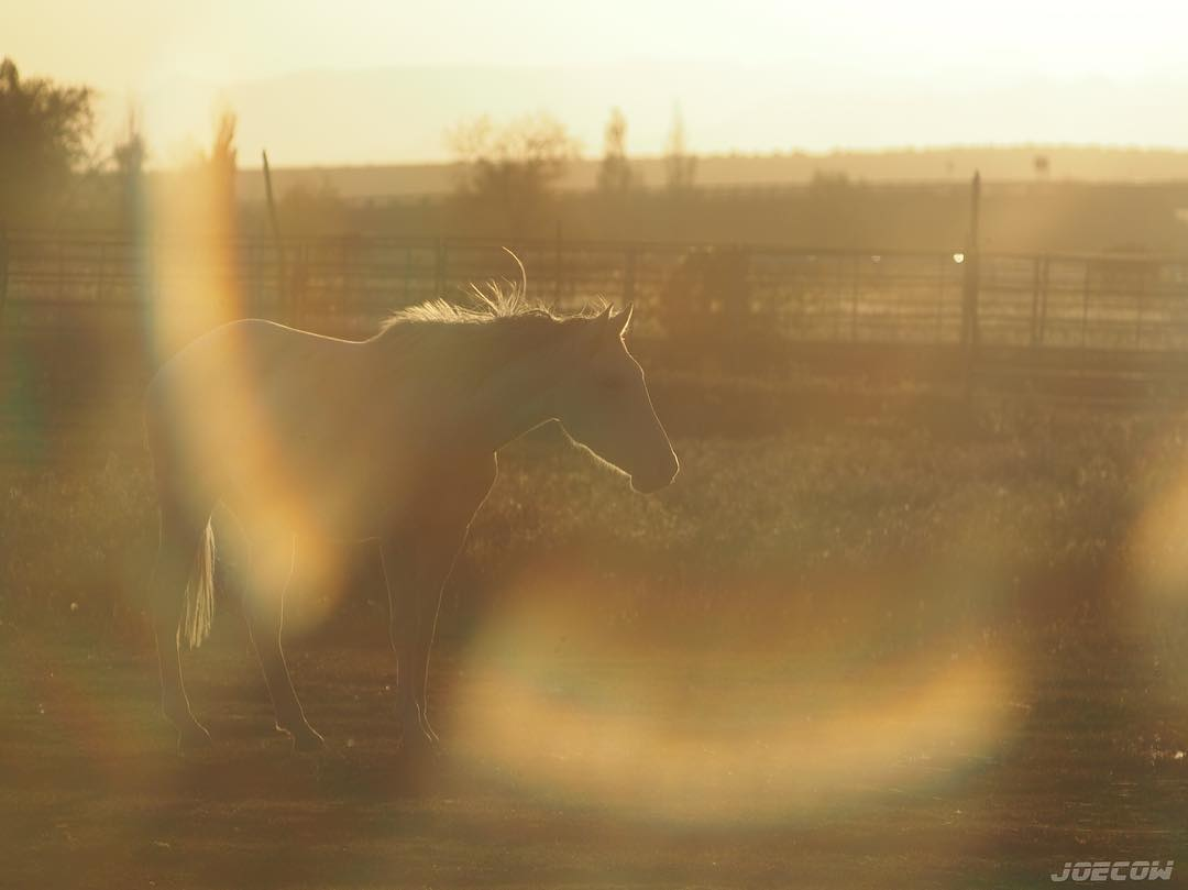 Horse in field during golden hour