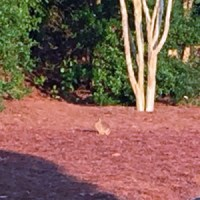 A bunny friend on a different day.