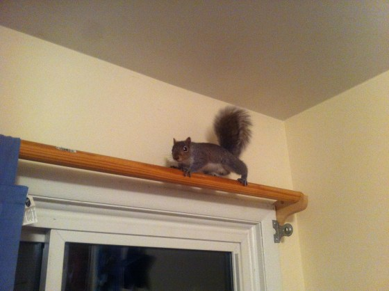 Is it the same squirrel from last time?
