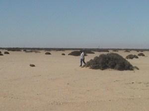 20040315 04 Namibia C35