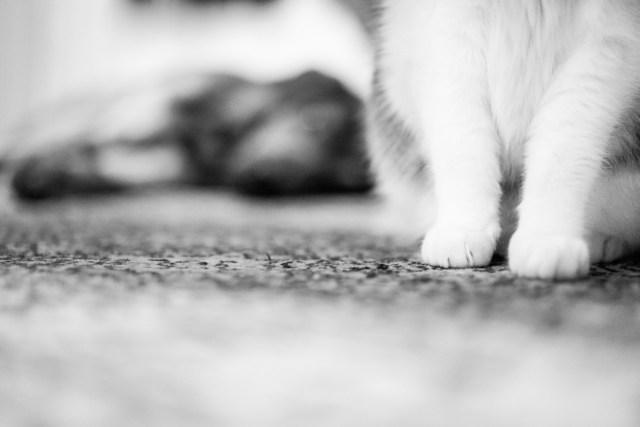 Die Katze Lissi