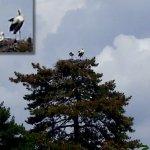 Storchfamilie im Nest