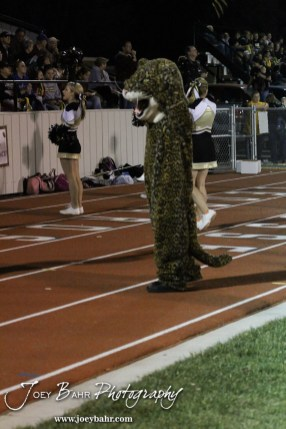 The LaCrosse Leopard cheers on the team during the Oakley at LaCrosse KSHSAA Class 2-1A Sectional Football Playoff game with LaCrosse winning 20-8 at LaCrosse High School in LaCrosse, Kansas on November 9, 2012. (Photo: Joey Bahr, www.joeybahr.com)