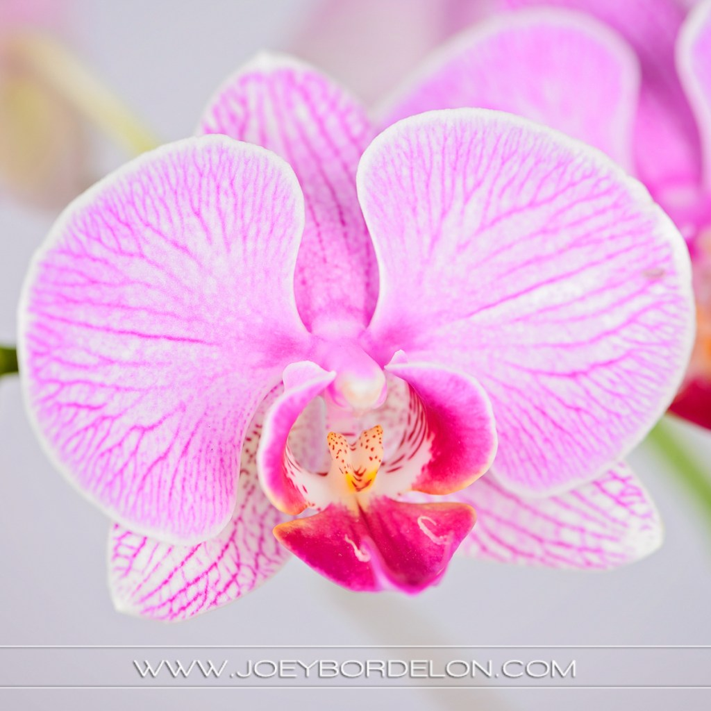 detail shot of small, pink flower for floral corporation
