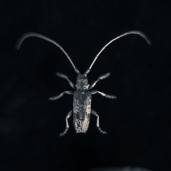 20090831-white-bug-Edit