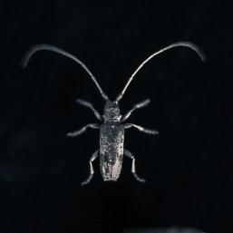 20090831-white-bug-Edit