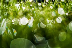 Lawn with dew drops