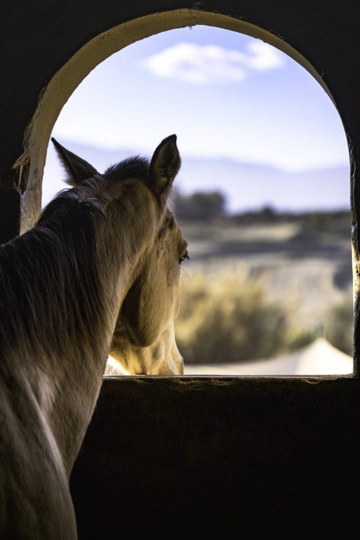 Enya horse photo