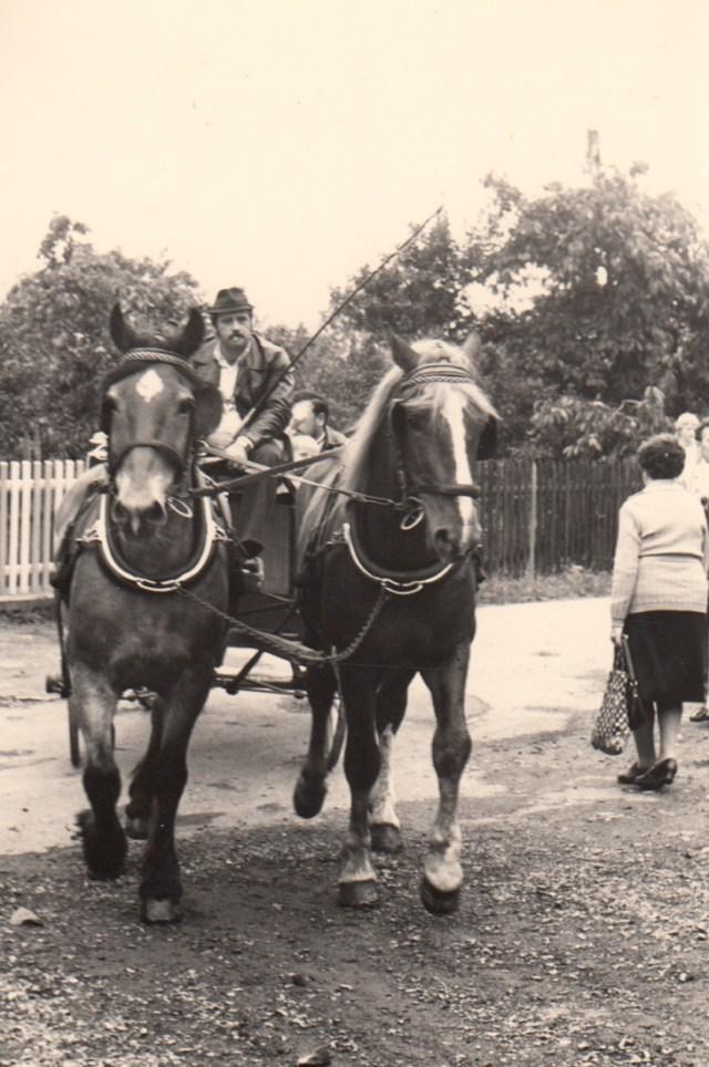 Ortspfarrer und KR H. Lins lassen sich wie früher mit der Kutsche zum Wiedereinweihungsgottesdienst fahren.