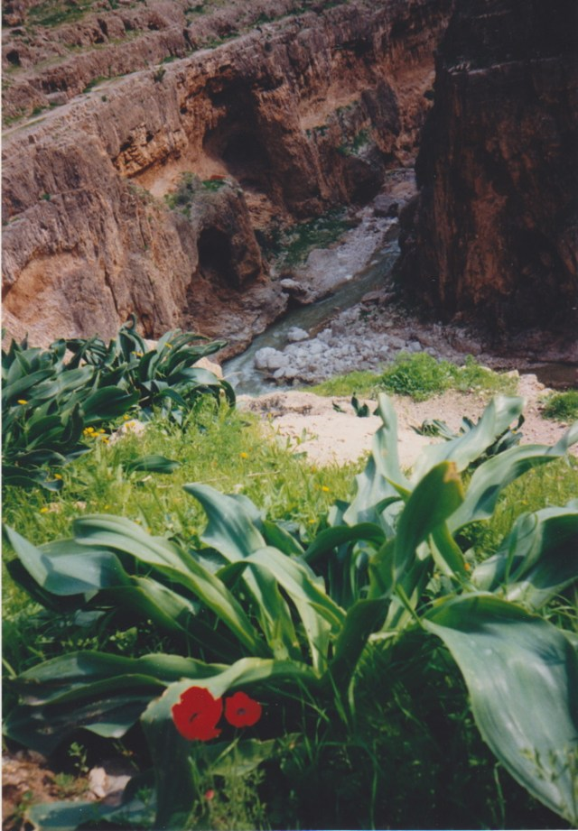 Grüne Wüste in Israel.