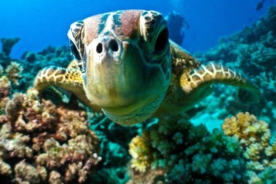 https://i2.wp.com/www.johansens.com/wp-content/uploads/2014/07/Turtle-Reef-1024x683.jpg?resize=550%2C367&ssl=1