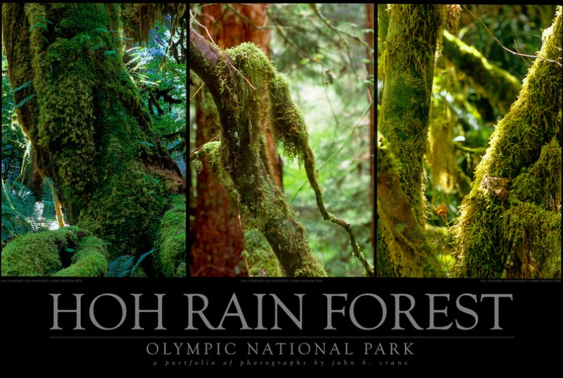 Hoh Rain Forest Triptych, Olympic National Park, Washington