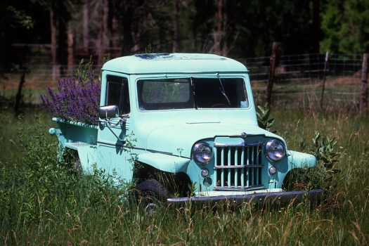 Old Jeep Willys Pick up truck living out the rest of its days as a planter, Taos, New Mexico (2013)